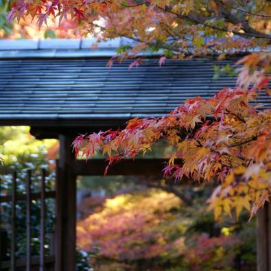 名古屋市内最大の日本庭園 白鳥庭園の紅葉狩りと料亭賀城園メインイメージ