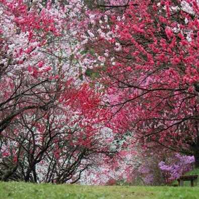 日本一の桃源郷花桃の里とヘブンス園原の水芭蕉メインイメージ