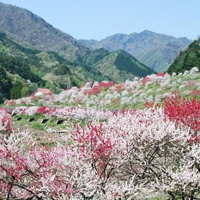 日本一の花桃の里とヘブンスそのはらの水芭蕉を訪ねて~5000本の花桃と黄色い水芭蕉~メインイメージ