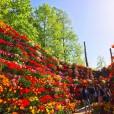 花の大谷-4