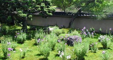 京都花の寺巡り 『期間限定!沙羅双樹❀妙心寺・東林院』と『特別公開!桔梗❀東福寺・天得院』メインイメージ