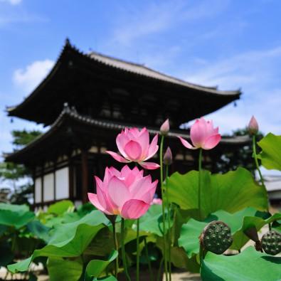 蓮とご朱印巡りを楽しむ旅~奈良・西ノ京ロータスロード特別ご朱印!~メインイメージ