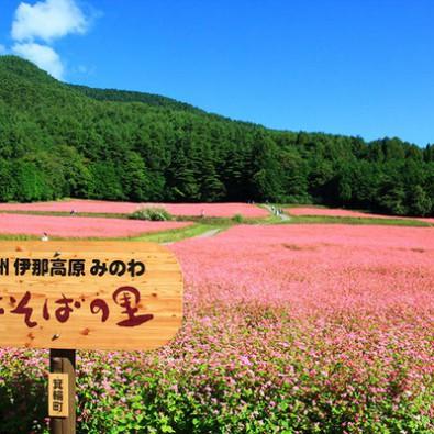 美しい秋の風景『信州伊那高原・赤そばの里』~日本では珍しい赤そばの花見渡す限りのルビーの絨毯~メインイメージ