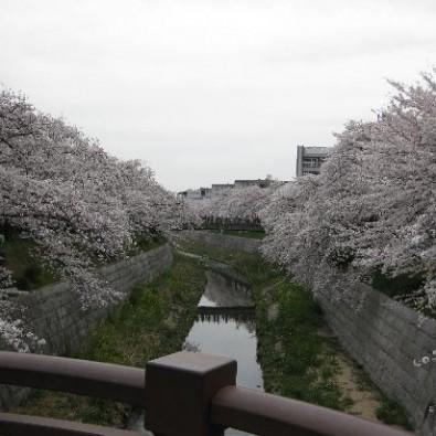 平成最後の尾張七大桜巡りバスツアーメインイメージ