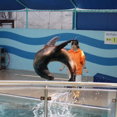 春限定の名物蒲郡うどんと、月に一度の地元市でお買い物 気になる竹島水族館にも行っちゃおう!【ちょいのり】メインイメージ