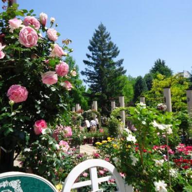 名古屋の洋風庭園で楽しむお花散策 ~蘭展開催中~メインイメージ