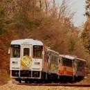 7 きのこ列車