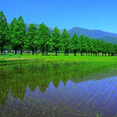 温泉ツアー第45回 マキノ高原温泉『さらさ』&メタセコイアの並木&海津大崎の桜~大自然を満喫できる高原温泉で身も心もなごませて~メインイメージ
