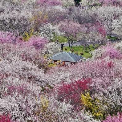 にぎわいの森と梅園散策 老舗旅館をリノベーションしたレストランTHE FUNATSUYAのイタリアンメインイメージ